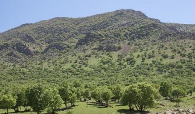 در باغ چه درختی بکاریم ؟ درخت بلوط